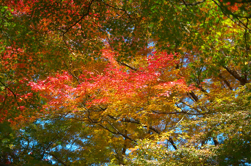 autumn colors 紅葉
