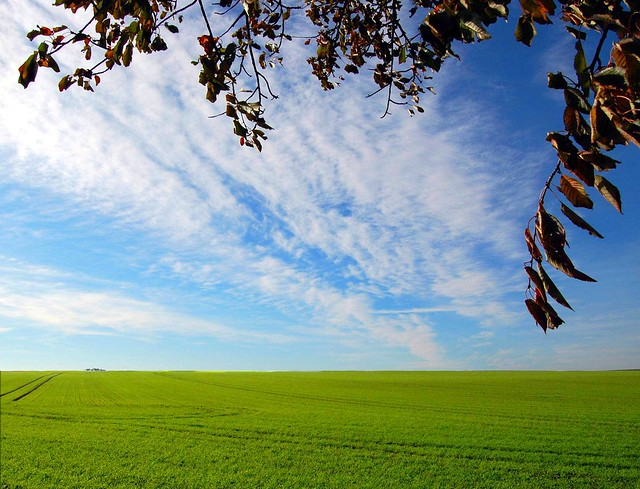 Green, green field......