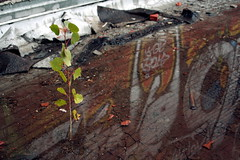 A tree growing in a tar roof