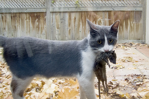 Hiya Kitty -- oh, dear...