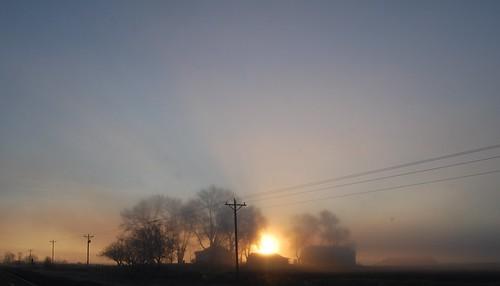 trees sunrise powerlines