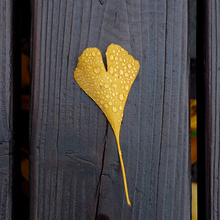 another heart - leaf