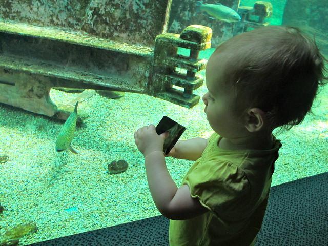 Aquarium du Val de Loire Flickr - Photo Sharing!