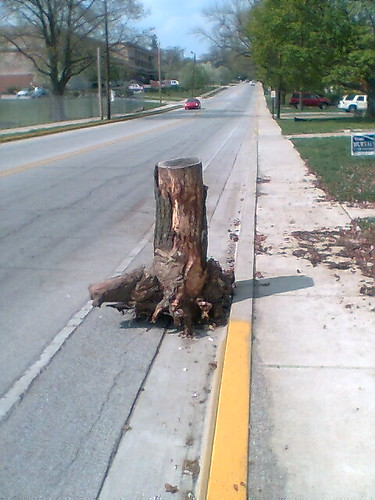 Tree stump blocking bike lane