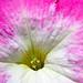 #2 Flower by emms76