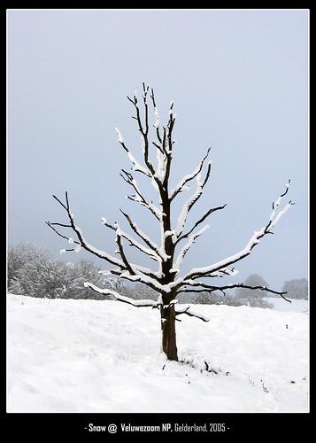 snowytree