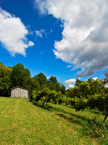 blue sky clouds barn rural northcarolina trinity grapes apples pickyourown grapevine appleorchard tokina1224mmf4 muscadines randolphcounty nikond80 southpaw20 hillsorchardandvineyard butisitabeebobarn