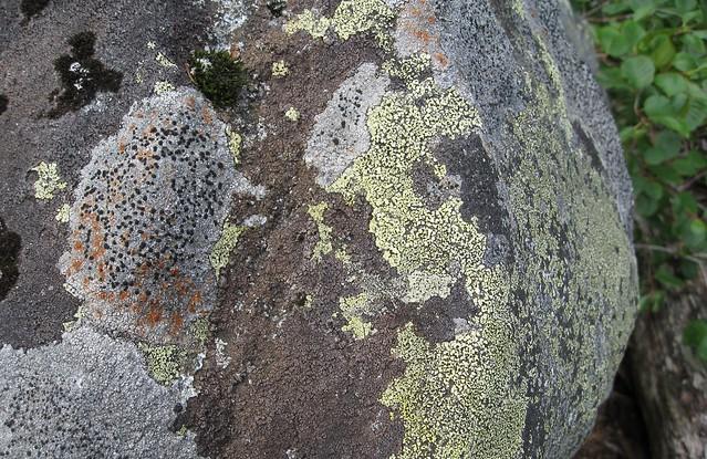 Dating lichens