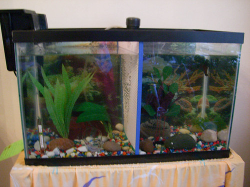 My 10gal with divider neons and male betta 31581 for Fish tank divider