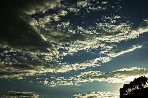 blue light sky tree luz azul backlight clouds contraluz landscape view venezuela caracas explore cielo nubes árbol vista minimalism minimalismo minimalist minimalista elmarqués diamondclassphotographer flickrdiamond