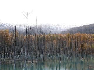 青い池 @ 2008-10-29