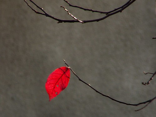 autumn red tree leaf branch yorkshire twig accent