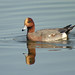Eurasian Wigeon - Photo (c) Len Blumin, some rights reserved (CC BY-NC-ND)