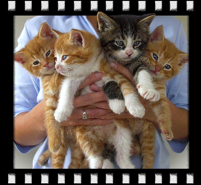 Cute Cat Kittens Pictures
