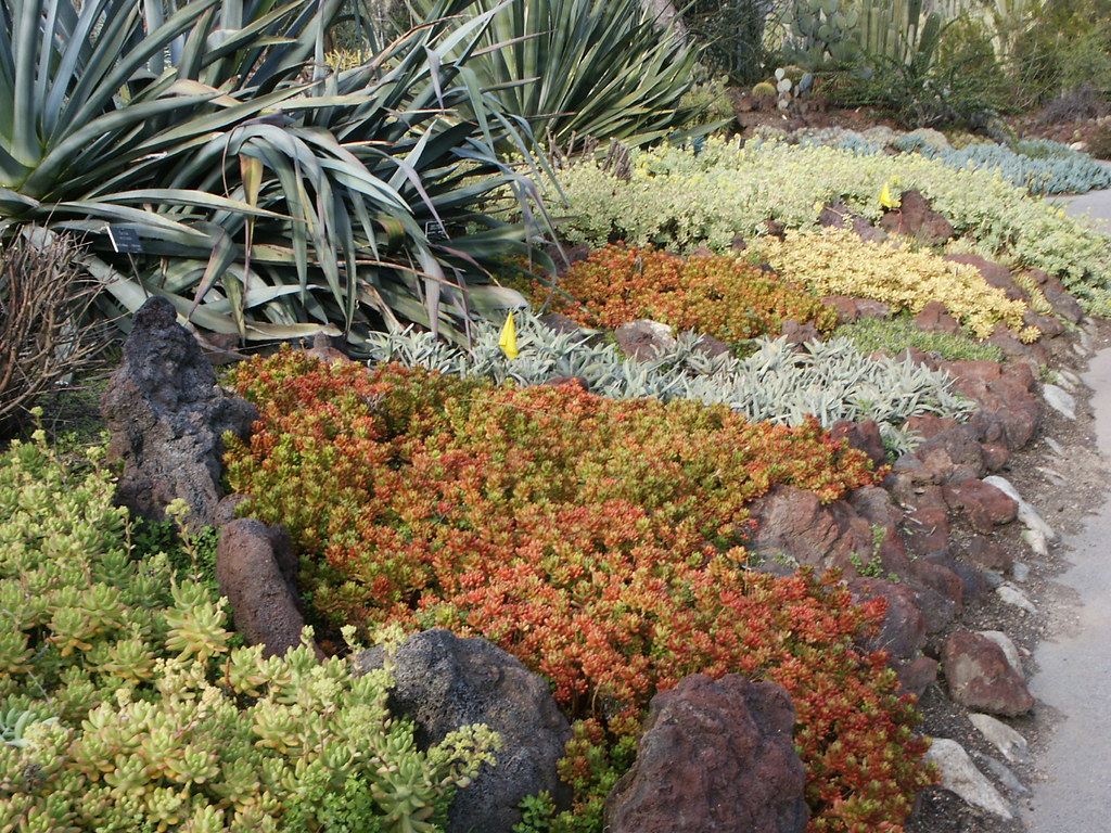 Succulent ground cover in colors, Huntington Library Desert Garden ...