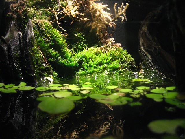 Aquarium Landscape Flickr - Photo Sharing!