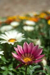 Flowers in Ravenna