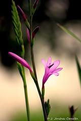 En Flor...