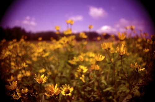 flowers 28mm wideangle wildflowers prairie filters vignetting f35 sugargrove p2wy manymanyfilters