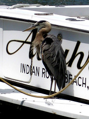 117 bird at the rental poperty