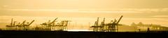 The Oakland Docks