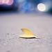 leaf on walk by gabensysmom (Angela)