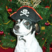 2008-12-09 - FSM Dogs (Jayne Pirate) - 0008 [4x6]