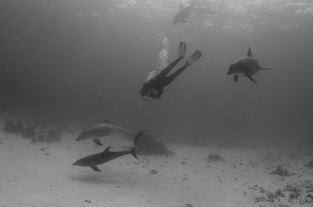 Humanos y delfines