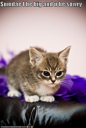 funny-pictures-angry-kitten-waits-to-grow