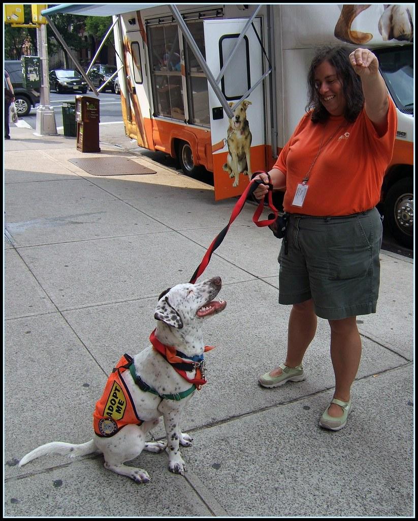 Greenwich Dog Adoption Event