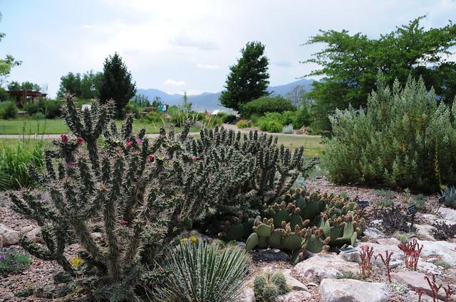 Xeriscape Garden Flickr Photo Sharing