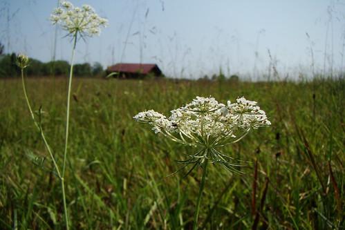 field barn tennessee meadow kingstontn