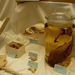 Specimens Collected on Robert Peary
