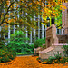 Small photo of University Of Washington Fall Foliage