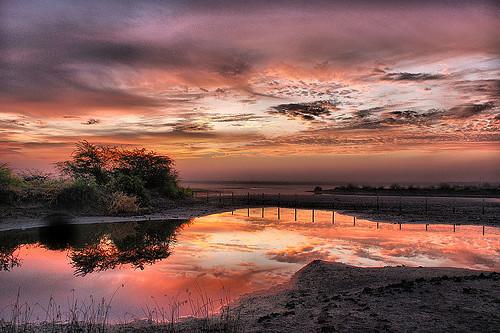 "sunrise jamnagar thepca colorphotoaward impressedbeauty ""flickraward"" khijadiyabirdsanctuary khijadiyasanctuarybirdkhijadiya22kmfromjamnagargujarat"