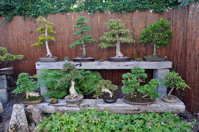 Wee Trees Bonsai Help Forum Advice For All View Topic