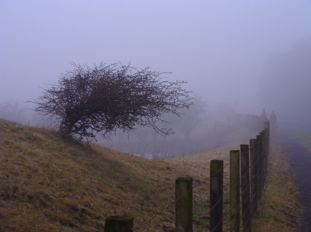 Foggy Roadside
