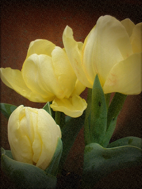 Tulips on Terracotta, Fujifilm FinePix A200