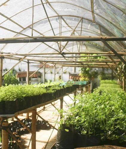 Semi-Greenhouse A