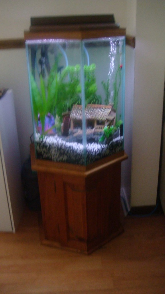35 gal hexagon tank for sale reef central online community for Hexagon fish tank lid