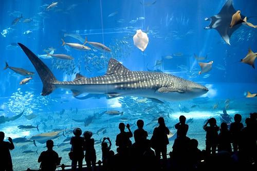 Acuario japones taringa for Acuarios para peces marinos