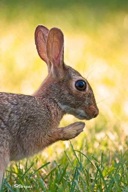 Rabbit Pray.jpg