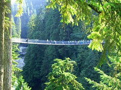 woodland, rainforest, suspension bridge, tree, canopy walkway, old-growth forest, green, forest, jungle, biome, vegetation, temperate coniferous forest, bridge,