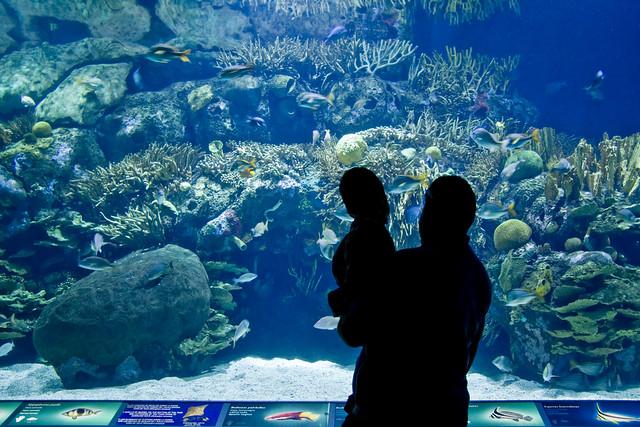 2781365923 927d061aff for Aquarium valencia precio