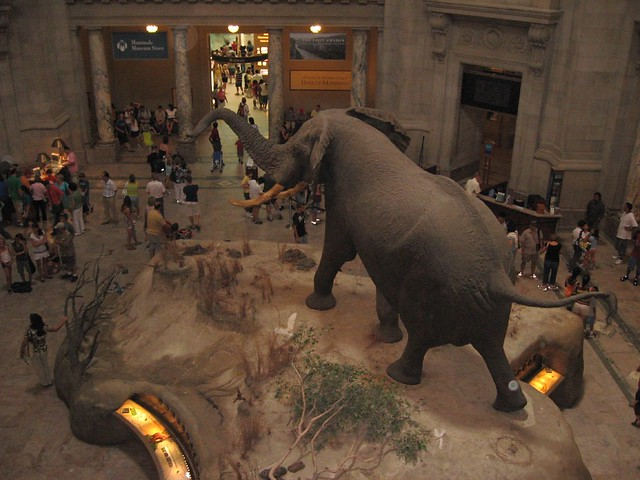 Second Floor, National Museum of Natural   History, Washington, D.C.