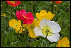Toowoomba Flowers