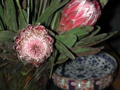 pattern, flower, floral design, plant, flora, flower bouquet, protea, pink, petal,