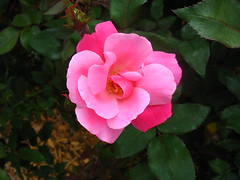 Epcot - Flower & Garden Festival