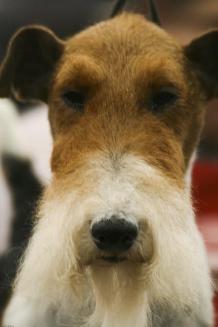 Philadelphia Dog Show