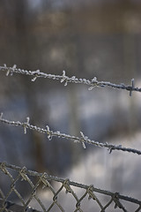 outdoor structure(0.0), branch(0.0), snow(0.0), net(0.0), freezing(0.0), twig(0.0), wire fencing(1.0), chain-link fencing(1.0), barbed wire(1.0), fence(1.0), winter(1.0), line(1.0), frost(1.0), iron(1.0),